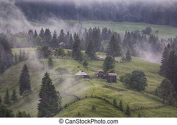 Mountain pasture covered with fog. Carpathians, Ukraine