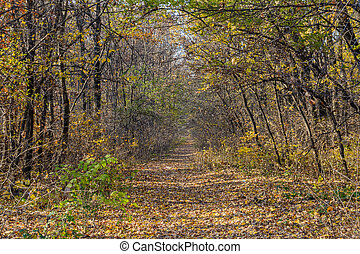 Mountain path in autumn landscape. Horizontal background of mountain path, trees and nature in autumn fall.