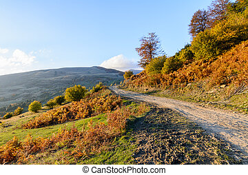 Mountain path in autumn landscape. Panoramic view over mountain path, trees and nature in autumn fall.