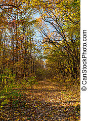 Mountain path in autumn landscape. Vertical view of mountain path, trees and nature in autumn fall.