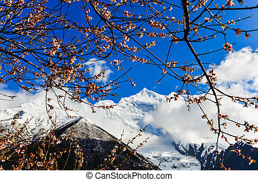 Mountain peak and apple tree flowers blooming