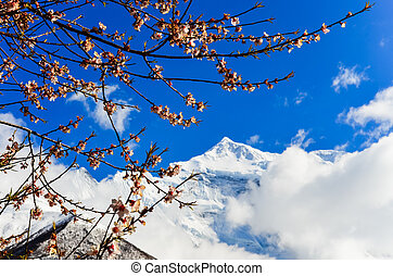 Mountain peak and cherry tree in blossom