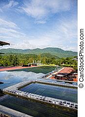 mountain., piscina, natação