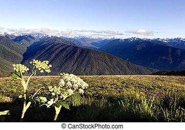 Hurricane Ridge in Olympic National park, Washington state