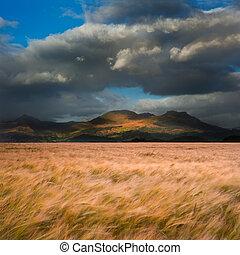 Mountain range landscape with field ofwheat blowin wind...