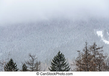 Mountain range with pine forest and fog, winter time with snow