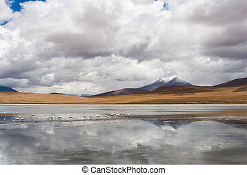mountain, reflecting in the lake with flamingos, bolivia
