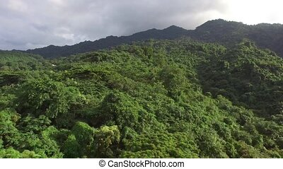 Mountain reserve government protected rain forest replete...