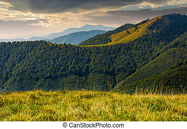 mountain ridge with forest on hills at sunrise