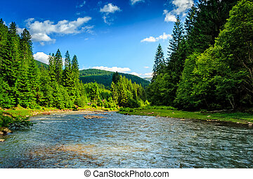 Mountain river among spruce forest - amazing blue and...