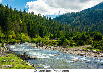 mountain river among the spruce forest. gorgeous landscape...