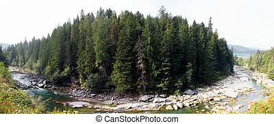 mountain river evergreen forest