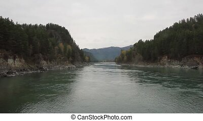 mountain river flowing between rocks with pine trees....