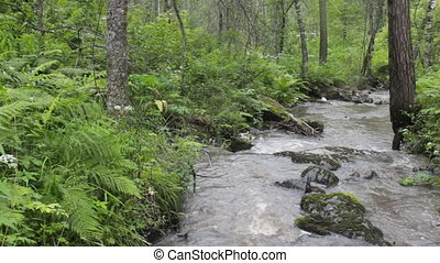 mountain river flows in  forest under a bias