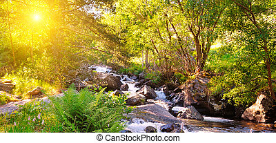 Stormy mountain river. Picturesque forest. The trees are lit by the bright rays of the sun. Wide photo.