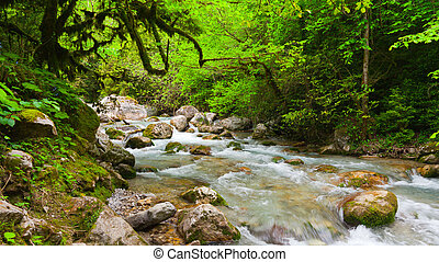 mountain river in beautiful forest