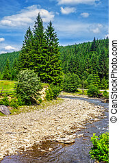 Mountain river in Conifer forest