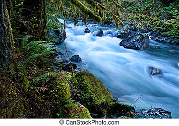 This beautiful nature image is a Pacific Northwest forest with a river running through over rocks with lots of moss hanging from trees and undergrowth ferns. This is taken of the North Fork of Nooksack River in Whatcom County Washington state America.