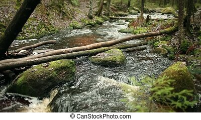 Mountain river in green forest