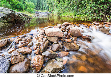 Mountain river in summer forest