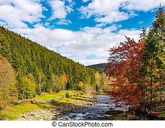 mountain river on fine autumn day. beautiful Carpathian...