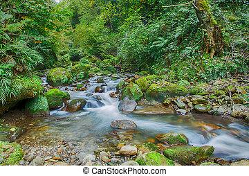 mountain river rapids Caucasus