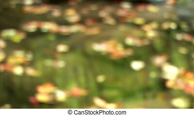 Mountain river. Reflection in water - High-Definition Videos...