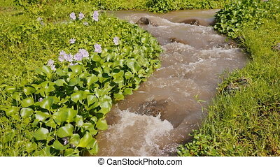 Mountain river with flowers and dense greenery. The mountain...