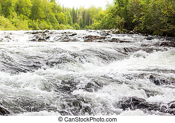 Mountain river with green plants on the shore
