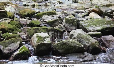 mountain river with stones in forest, panning