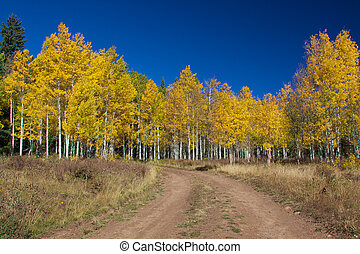 a dirt road in the mountains heads into an aspen grove in fall color