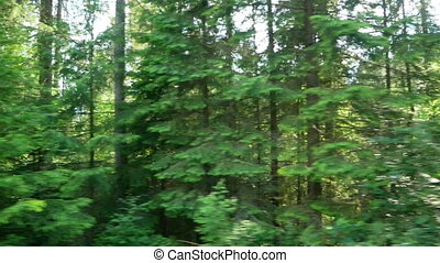 Mountain road car forest