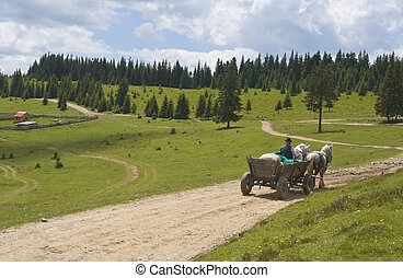 Cart pulled by horses on a mountain road. Location: Apuseni Mountains, Transylvania, Romania.