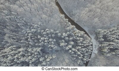 Mountain Road in a Snowy Forest - Snowy mountain road...