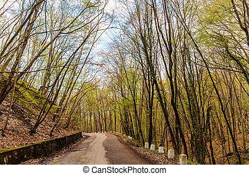 mountain road in Crimea
