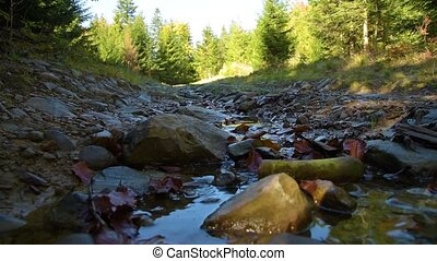 Stream on forest road - Mountain road in the forest. Stream...