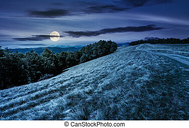 mountain road in to the beech forest at night in full moon...