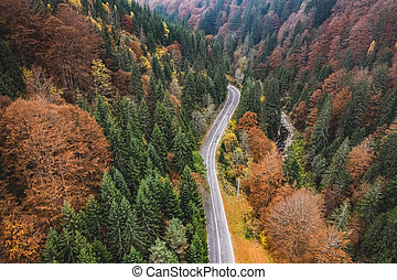 Mountain road through forest