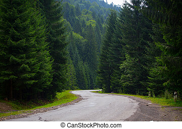 mountain road through the forest