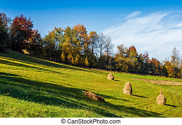 mountain rural area in autumn season. agricultural field...