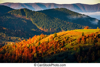 mountain rural area in foggy autumn morning - mountain rural...