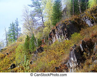 Mountain slope - On mountain steep slope grow deciduous...