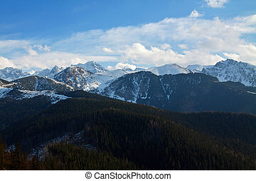 Mountain snowy landscape with forest