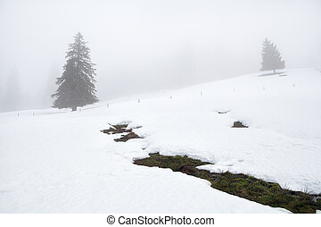 mountain spring and trees in winter fog