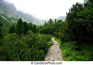 Tatras. Mountain road in the forest