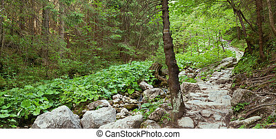 mountain stony path in forest