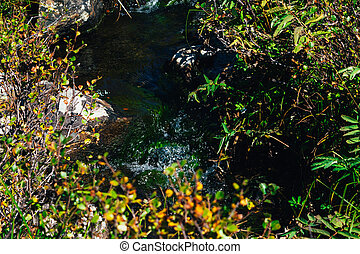 Mountain stream, a spring in the rocks on a summer day