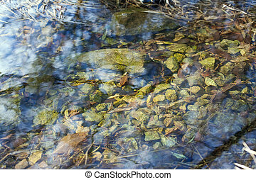 Mountain stream close-up