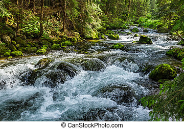 Mountain stream flowing between mossy stones