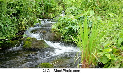 Small mountain stream flowing over rocks in mong green grass